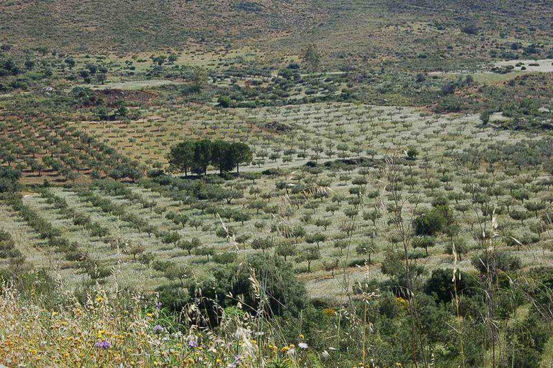 Agrove