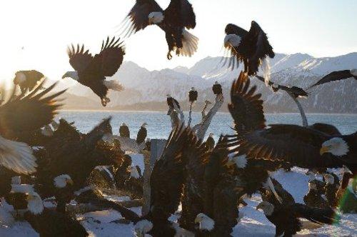 Eagles_2